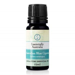 australian blue cypress essential oil, cypress oil, cypress essential oil, blue cypress uses and benefits, blue cypress essential oil uses