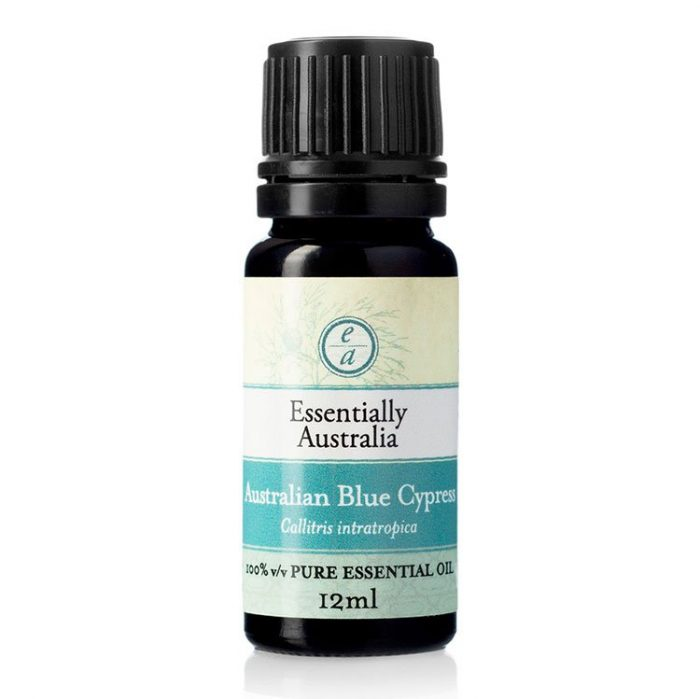 australian blue cypress essential oil, cypress oil, cypress essential oil, blue cypress uses and benefits, blue cypress essential oil uses