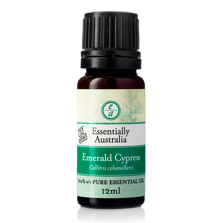 Emerald Cypress CO2 Extracted Essential Oil, emerald cypress essential oil, emerald cypress oil