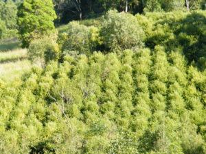 Zest Myrtle Plantation
