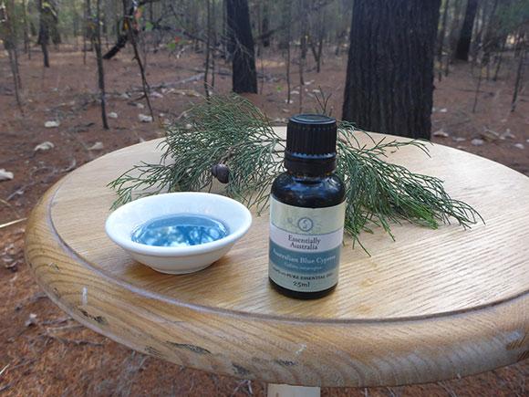 Australian Blue Cypress in Australian Blue Cypress Plantation an Australian Essential Oil