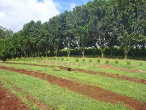 Plantation Shot
